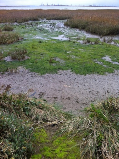 "Mesolithic revisited - ""Doggerland swamps"". Photograph by Justina Hart"