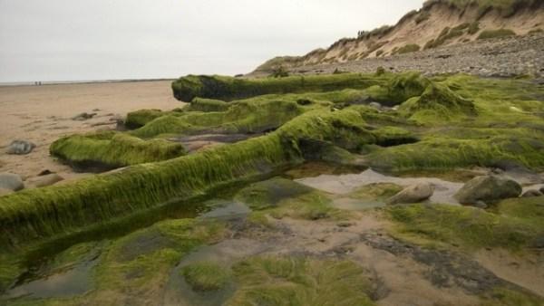 Druridge Bay, Northumberland. Photograph by Dr Louise Callard