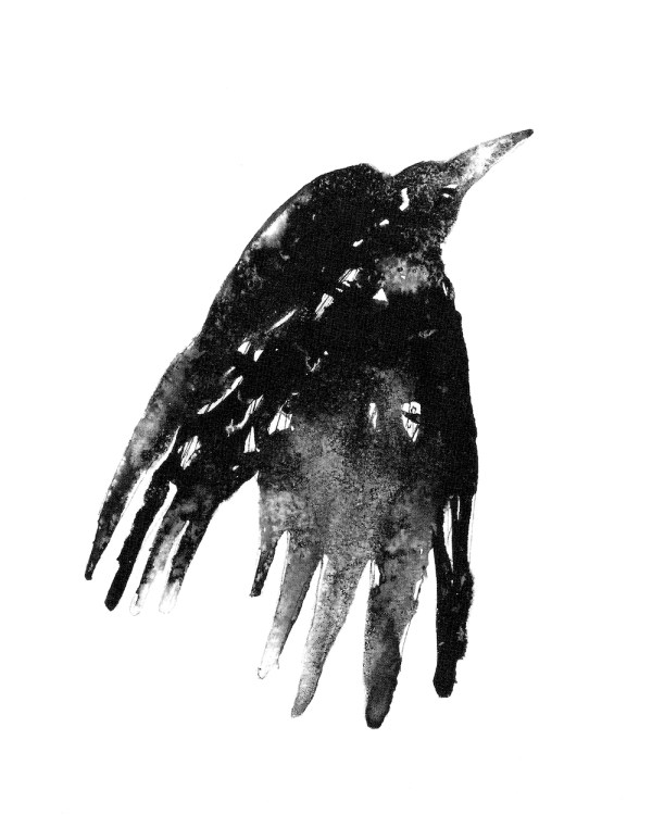 Presence: showing 'Rook', from the collection 'Winged' by James Roberts