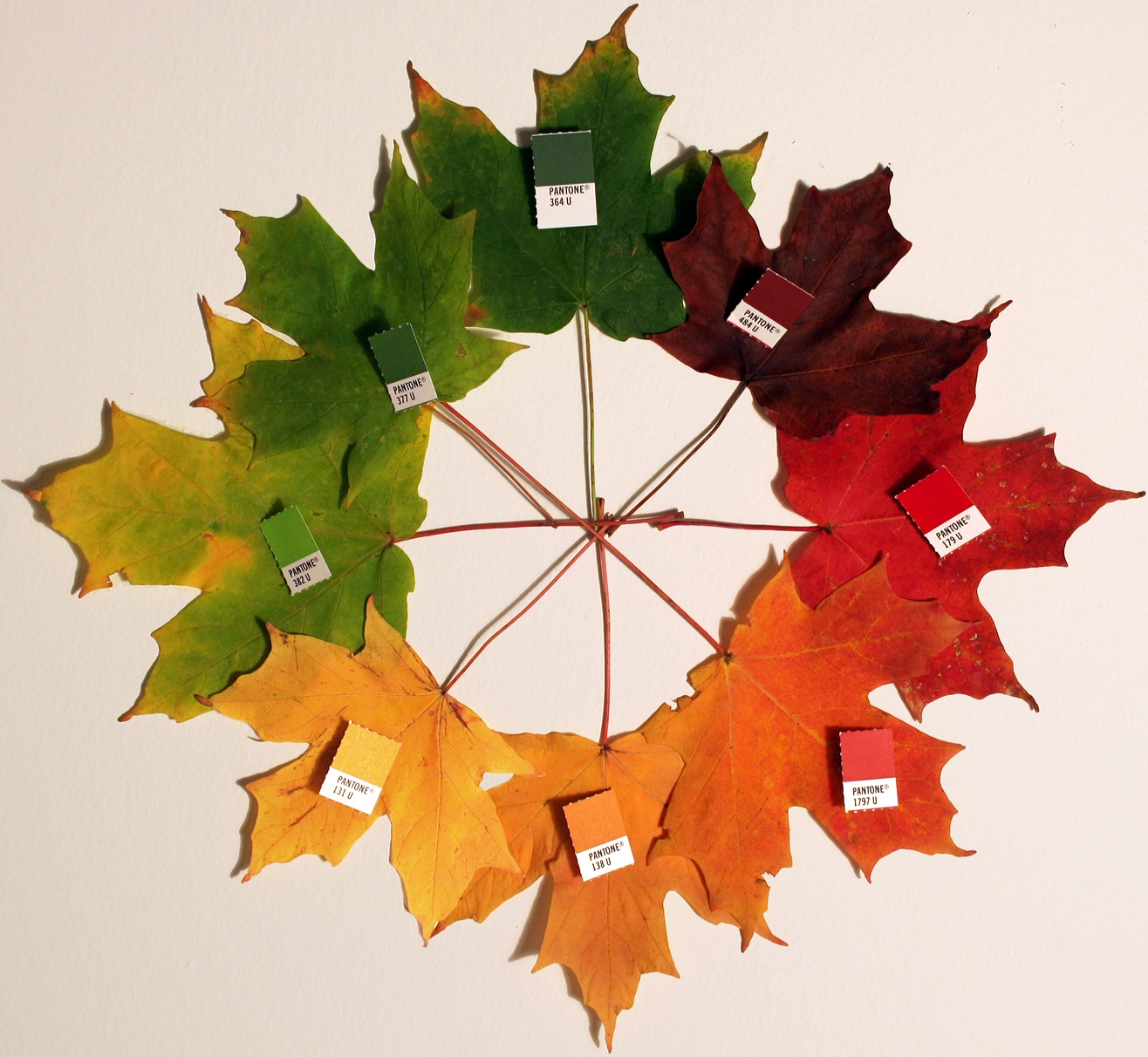 Make A Stained Glass Leaf