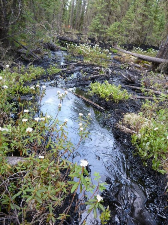 Tar sands spill in Cold Lake Alberta