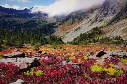 Ewing Basin Fall Colors