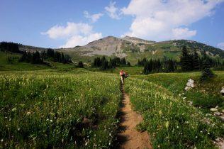 Cloudy Pass Meadows