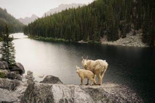 Nada Goats
