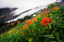 Wildflowers along the Hogsback climber's trail.