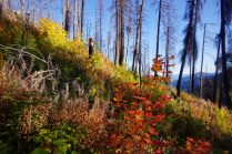 Beautiful colors in the burn zone.