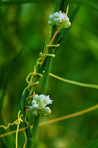 Argentina Native Plants