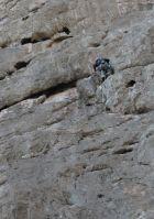 Dibba Climbing, Wadi Khab El Shamis, Musandam, Oman 58