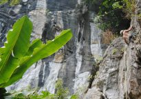 Butterfly Valley, Sport Climbing, Cat Ba Island, Vietnam 3