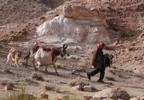 Wadi Tibn, Wadi Sabra, Petra, Jordanie 22