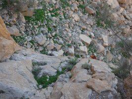 La Princesse a la Dalle, Wadi Naqab, Émirats 26