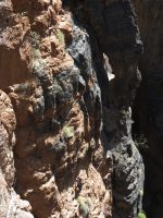 Snake canyon, Jebel Akhdar 28
