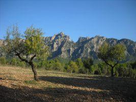 Escabroni Escapullini a la Miranda de Can Jorba, Montserrat, Espagne 1