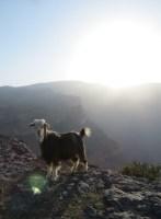 Ferrata du Jebel Shams, Jebel Akhdar 50