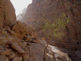 Hell Rock, Wadi Naqab, Émirats 16