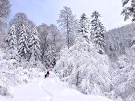D'Artigue à l'Escalette, Le Mourtis, Ariège, France 14