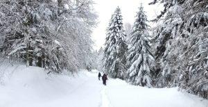 D'Artigue à l'Escalette, Le Mourtis, Ariège, France 9