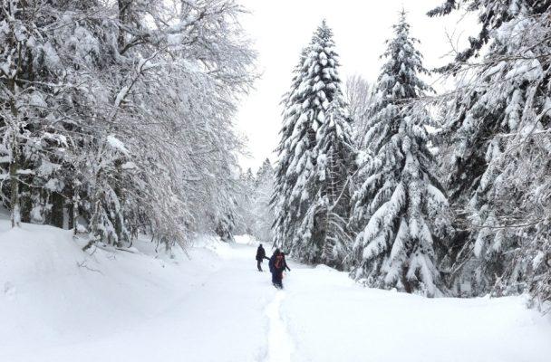 D'Artigue à l'Escalette, Le Mourtis, Ariège, France 2