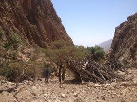 Jebel Kawr, Oman 15