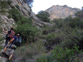 Basalm del Tigre a la paret Bucolica, Oliana, Espagne 2