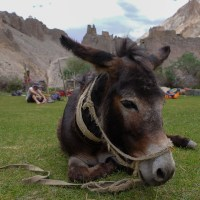 Zinchan, Markha Valley & Zalung Karpo La, Ladakh, Inde 42