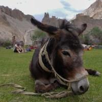 Zinchan, Markha Valley & Zalung Karpo La, Ladakh 41