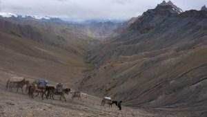 Zinchan, Markha Valley & Zalung Karpo La, Ladakh, Inde 69