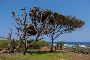 Pointe d'Evatraha, Tolanaro, Anosy, Madagascar 37