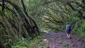 Cascades du Bras d'Anette, Saint-Benoit 7