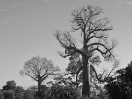 Begidro à Tsimafana, Tsiribihina, Morondava 47