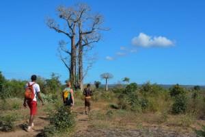 Begidro à Tsimafana, Tsiribihina, Morondava, Madagascar 61