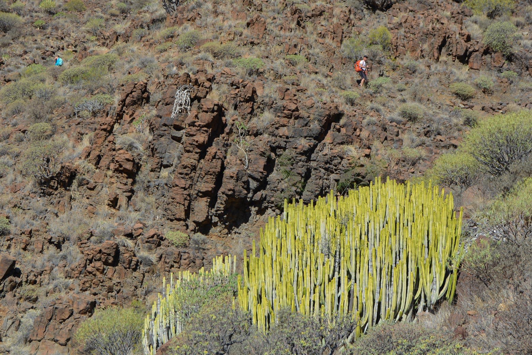 Camino de Güi-Güi, Gran Canaria, Espagne 45