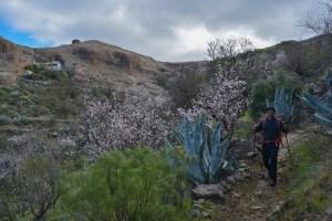 La Cañada de las burras, Gran Canaria 17
