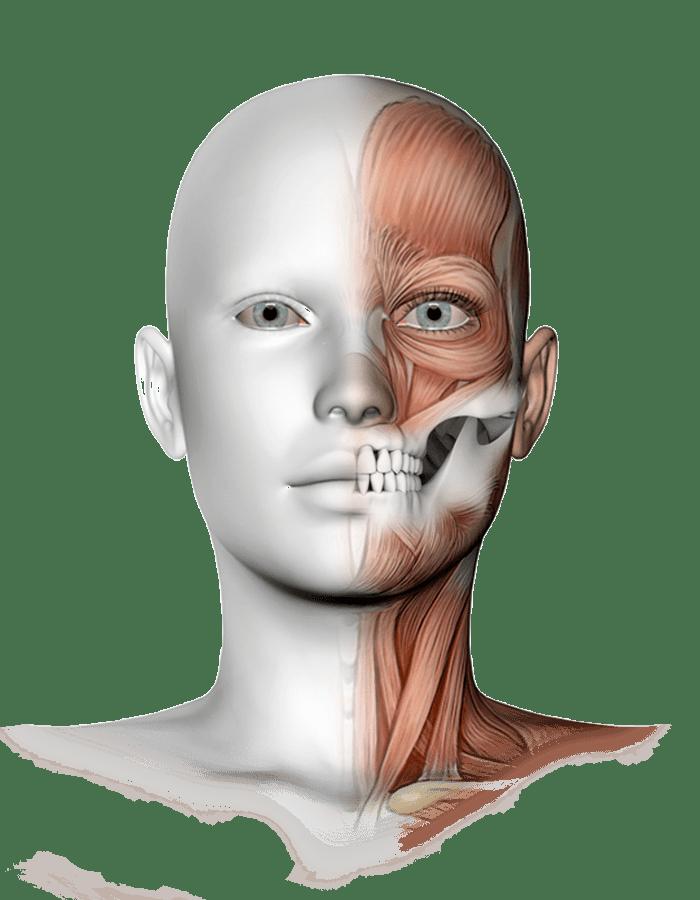 ¿Que es la Rehabilitación Neuro-Oclusal?