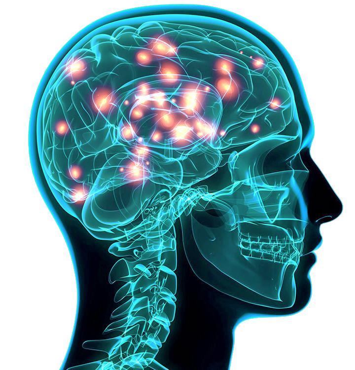 Masticación memoria y aprendizaje