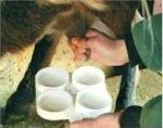 La técnica se basa en conseguir que los ácidos grasos omega-3 con los que se suplementa la dieta del ganado lleguen intactos al intestino delgado.