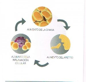 Algunos estudios indican a la inflamación de las células de grasa o lipoinflamación como causa subyacente de la persistencia de la enfermedad.