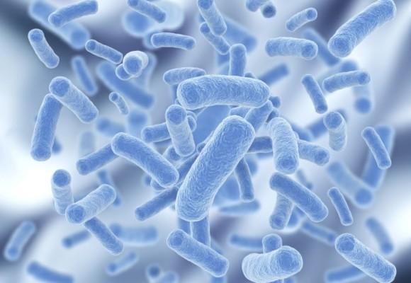 Dos estudios en roedores a los que se había transferido bacterias de los intestinos humanos prueban que intervenir sobre la composición del microbioma es una manera de mitigar los retrasos en el crecimiento producidos por la falta de nutrientes.