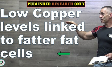 Low copper levels linked to fatter fat cells