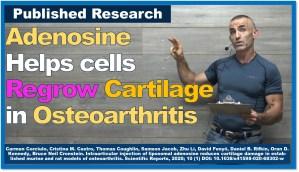 Adenosine Helps Regrow Cartilage in Osteoarthritis