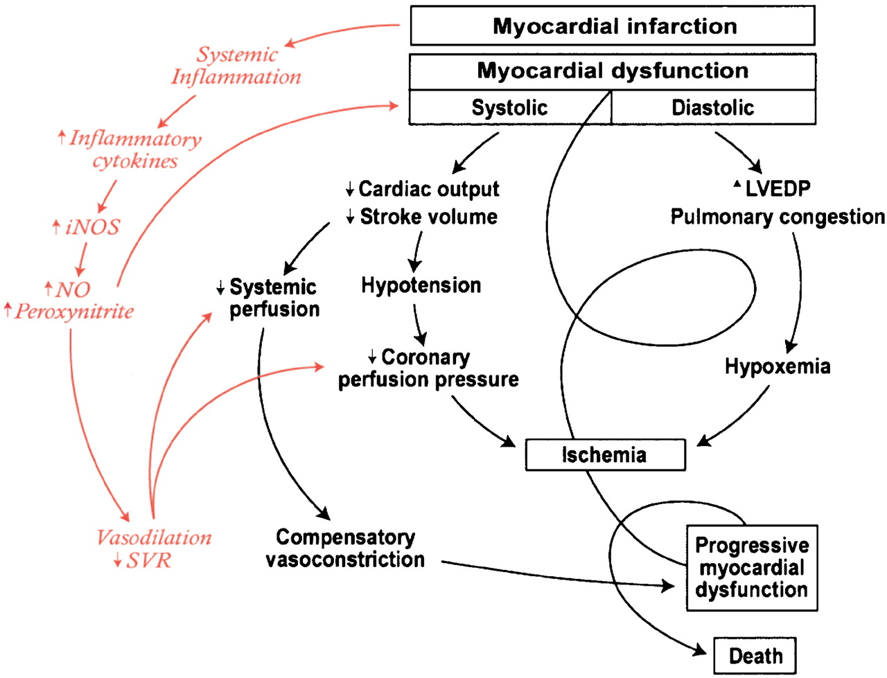 Normal And Abnormal Fluid Distribution And Function