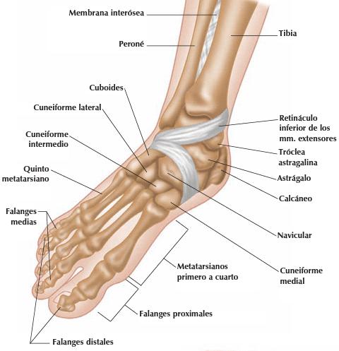 Lesiones de pie - Clínica Martín Gómez Traumatólogos