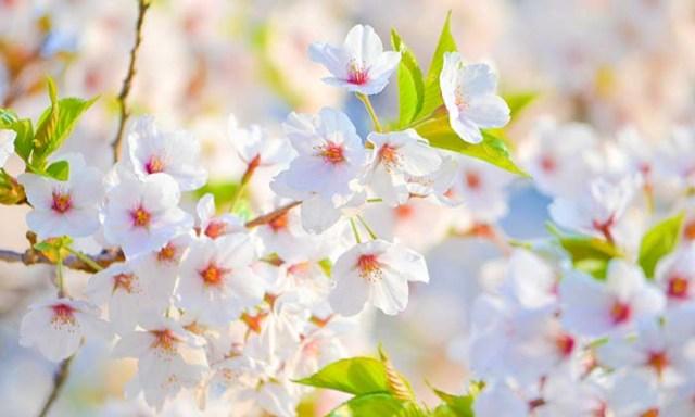 Frases-de-primavera