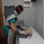 Servicios ofrecidos en Clinica Veterinaria San Miguel