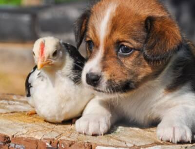 Brighton Eggert Animal Clinic Tonawanda