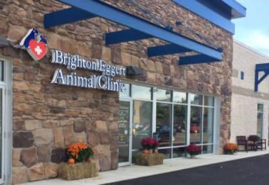 Brighton Eggert Animal Clinic