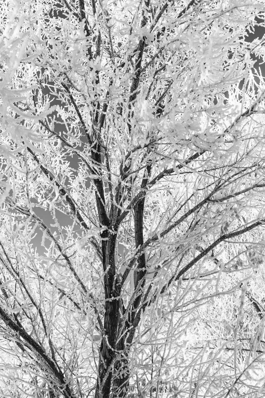 Winter's Grip Monochrome Vertical - Utah Fine Art Nature Photography