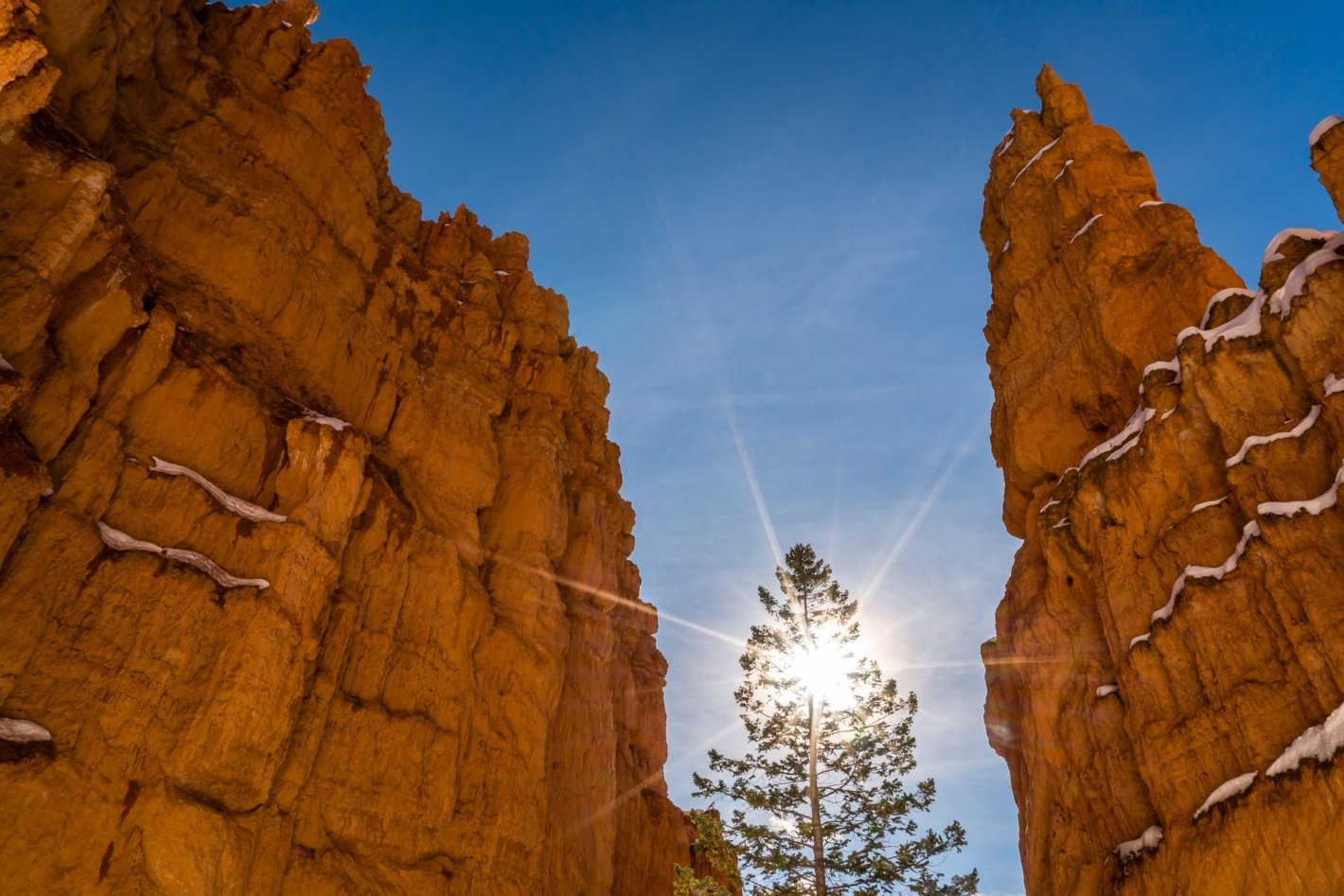 Hope Waits - Bryce Canyon National Park Nature Photography