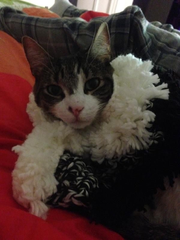 Pronto per la Cat Fashion week! :D