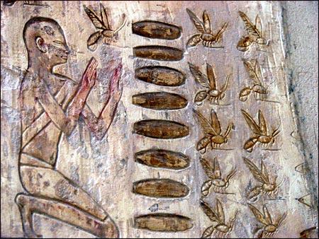 Questo bassorilievo egizio mostra che l'apicoltura era già diffusa